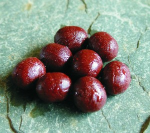 Enterprise Bloodworm Pellet