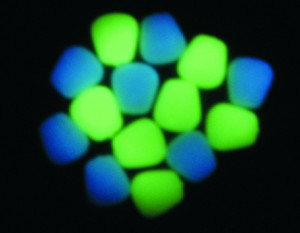 Enterprise tackle Glow in the dark Pop Up Sweetcorn